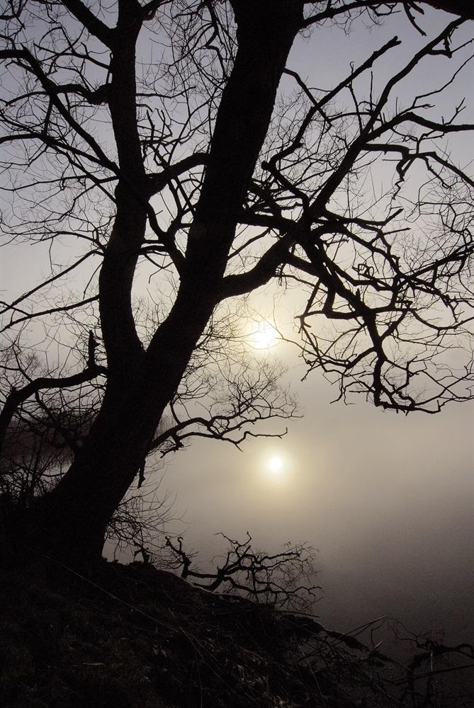 Spökträd